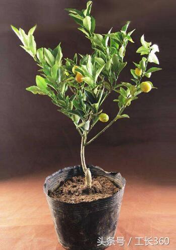 風水植物有哪些?助財運的植物少不了它們 - 每日頭條