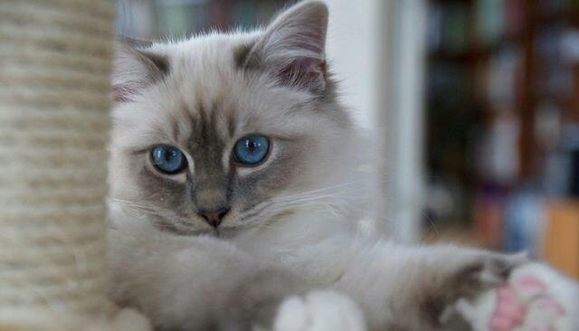 想要買寵物貓咪來這裡看看哦,推薦價格 - 每日頭條
