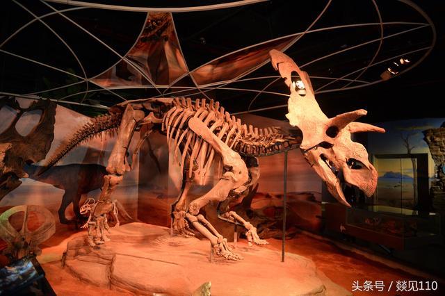 周末遛娃好去處:廣州正佳「自然科學博物館」帶你回到46億年前 - 每日頭條