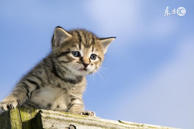 剛斷奶的貓咪怎麼餵養?貓咪斷奶後適合吃什麼? - 每日頭條