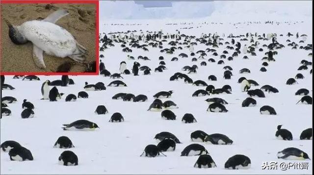 人類危在旦夕還在關心北極融化?真正可怕的是南極也在融化! - 每日頭條