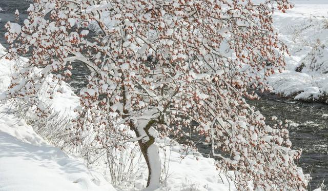 賞雪必備!描寫雪景的唯美古詩句 - 每日頭條