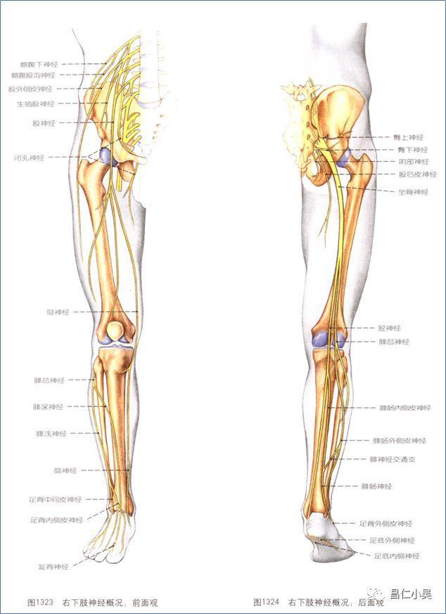 神經解剖學習筆記:脊髓和及神經解剖 - 每日頭條