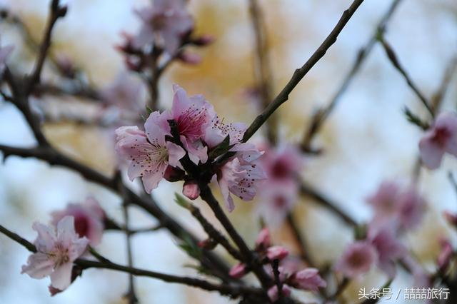 春風吹,百花開 - 每日頭條