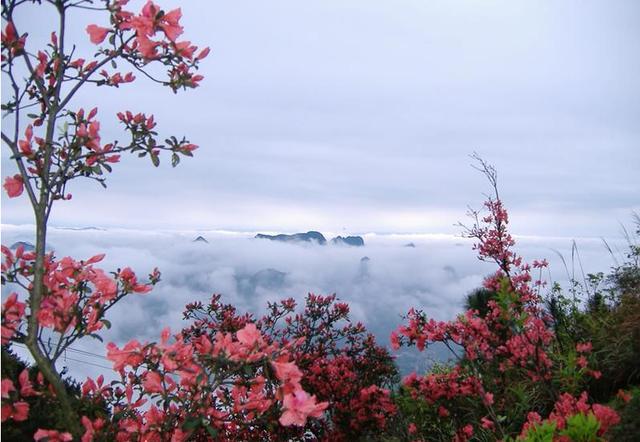 涼涼天意瀲灩一身花色。何時還會春盛。與你天地間徜徉! - 每日頭條