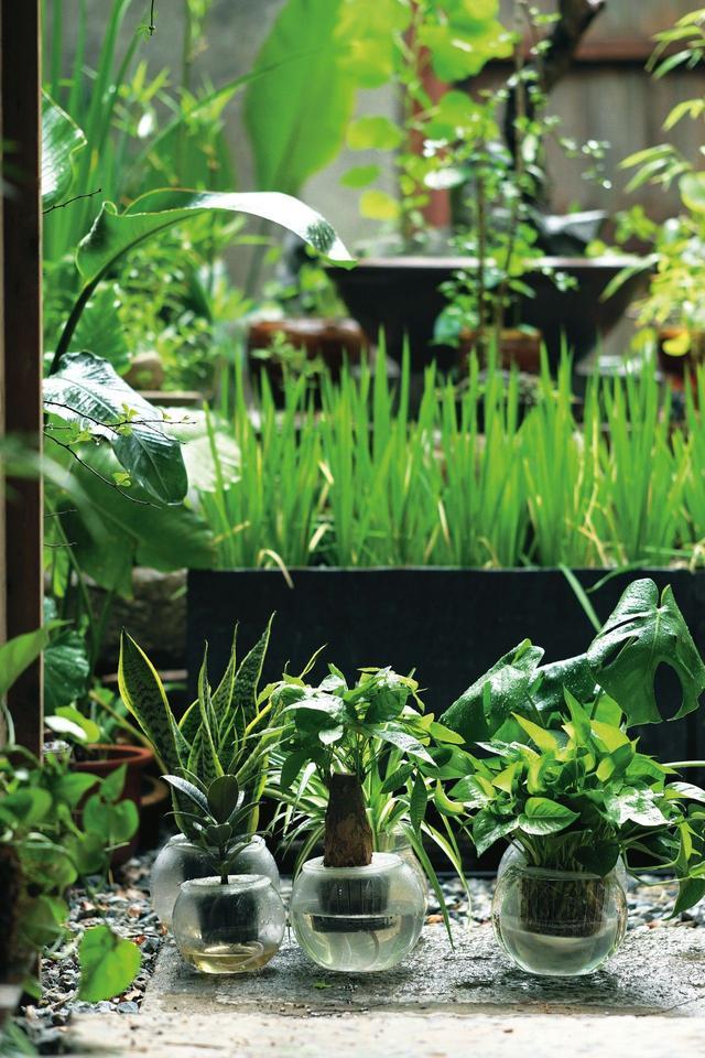 我這麼懶,還能養植物嗎…… - 每日頭條