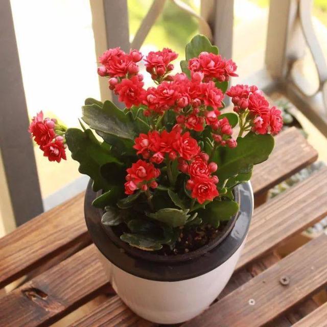 這些花冬季在室內養護,容易開花又很漂亮 - 每日頭條