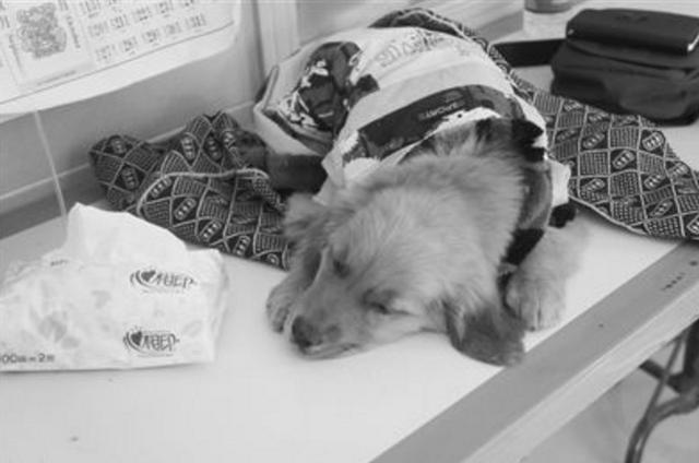 寵物疫苗真的很有效麼?寵物不打疫苗會出現什麼問題。請重視 - 每日頭條