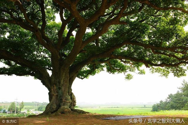 墳墓附近是否可以種樹?注意樹的種類 - 每日頭條