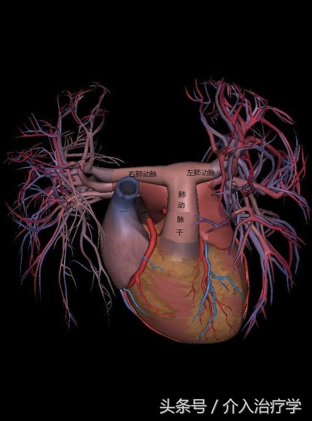 人體肺的血管圖像 - 每日頭條