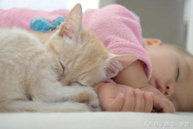 跟貓一起睡覺的6大危害,看完你還敢讓貓進被窩嗎? - 每日頭條