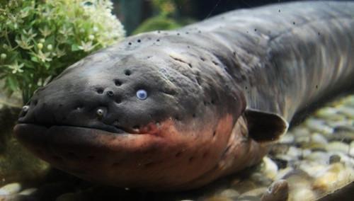 大盤點之不能不看的10種亞馬遜河裡最可怕的動物 - 每日頭條