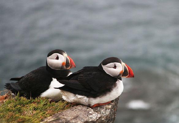 海鸚:會飛翔的企鵝。會潛水的鸚鵡 - 每日頭條