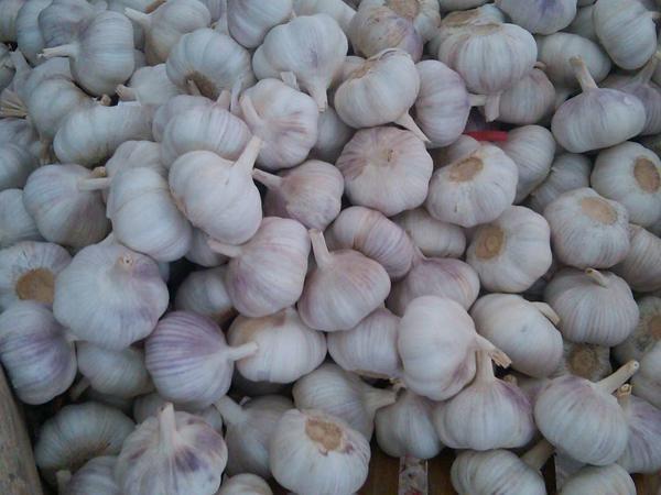 新蒜頭什麼時候上市 新鮮大蒜醃製方法有哪些 - 每日頭條