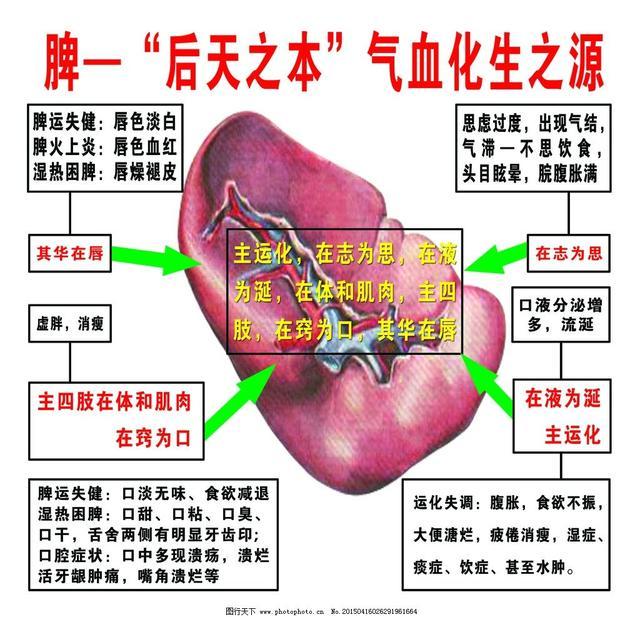 五臟中的脾臟稱為「後天之本」「氣血化生之源」你知道嗎 - 每日頭條