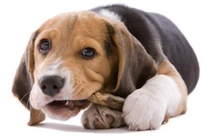 狗狗嘔吐頻頻,原因你搞清楚了嗎? - 每日頭條