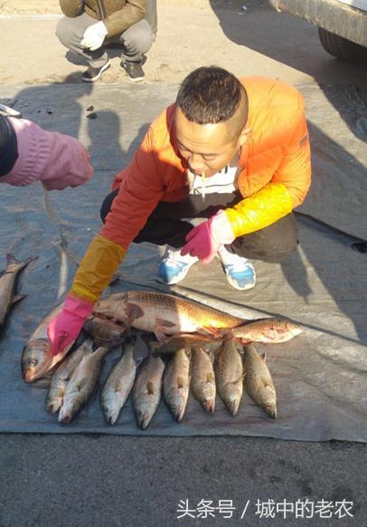 兩種鱸魚傻傻分不清,鱸板,淡水鱸魚你吃過嗎? - 每日頭條