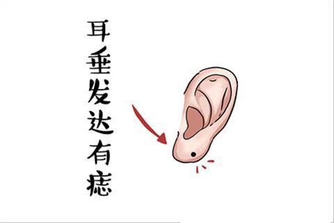 耳朵長這樣的人,頭腦靈活考試不愁 - 每日頭條