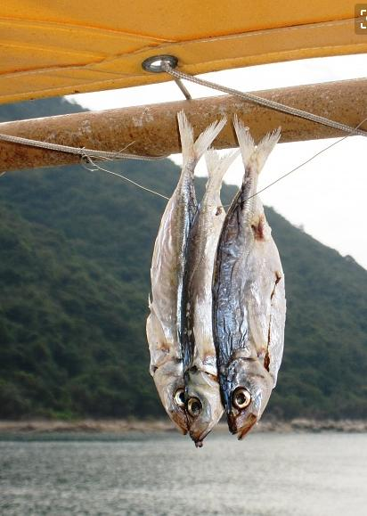 鹹魚的營養價值。能有效提高孩子的智力 - 每日頭條