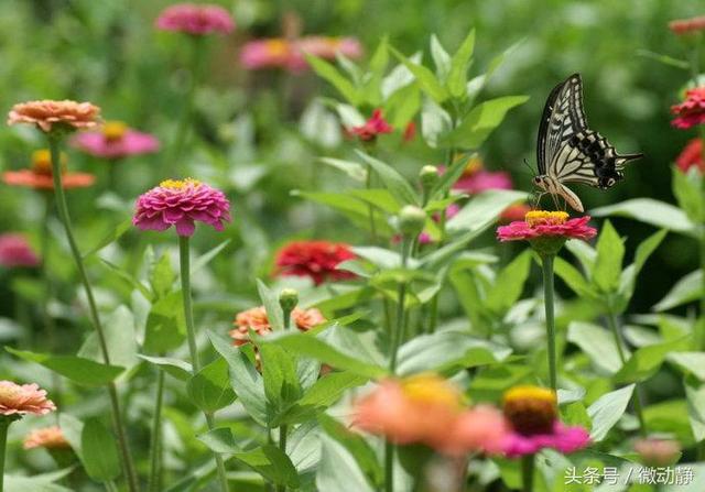 世界上花期最長的10種花——四季桂花開四季 - 每日頭條