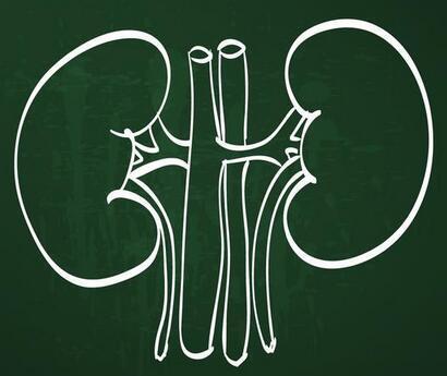 血肌酐正常了,能說明腎功能已經正常了嗎? - 每日頭條