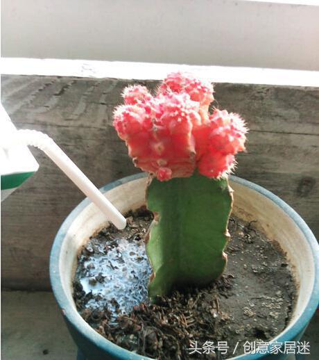 用這些液體來澆花。不發黃又不生蟲。葉子越長越茂盛 - 每日頭條