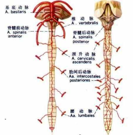 當脊髓炎遇上治好脊髓炎湯結局如何呢 - 每日頭條