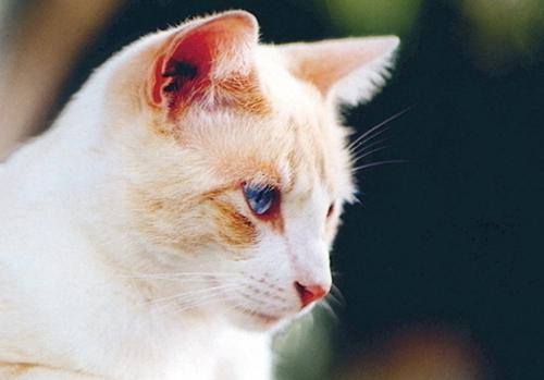 貓咪鼻支打針幾天才能好 鼻支吃什麼藥 - 每日頭條