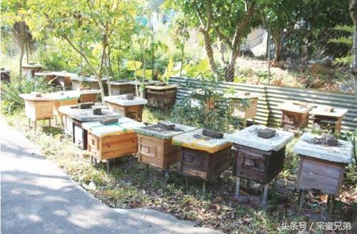 意蜂生產群怎樣直接介入新產卵王? - 每日頭條