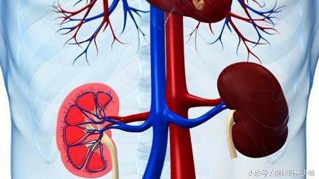 10分鐘讓你深入了解痛風性腎病。學會辨別、治療真的並不可怕! - 每日頭條