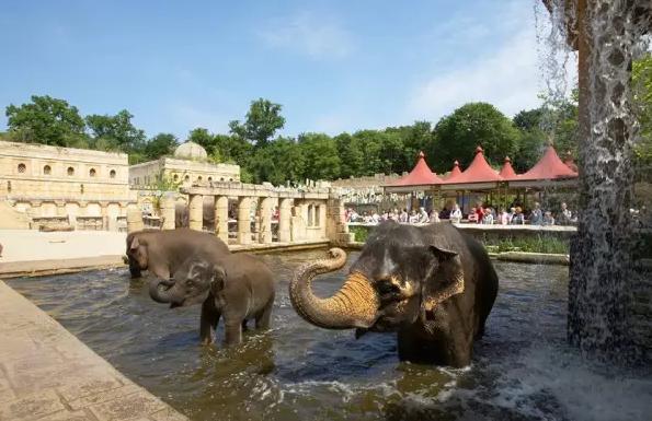 這個暑假去德國動物園尋找歡樂 - 每日頭條