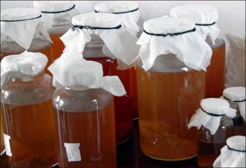別再用茶葉水澆花了。養花達人教你正確的盆栽澆花方法! - 每日頭條