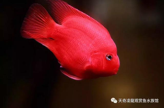 鸚鵡魚的好夥伴你知多少? - 每日頭條