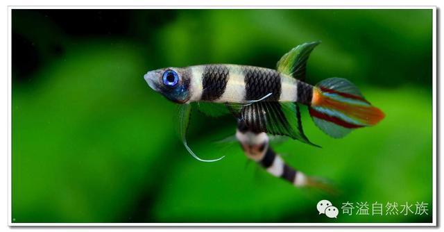 新手必讀 - 鱂魚飼養(二) - 每日頭條