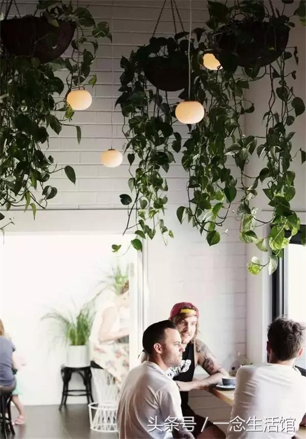 鮮花的世界。這到底是花園還是餐廳啊? - 每日頭條