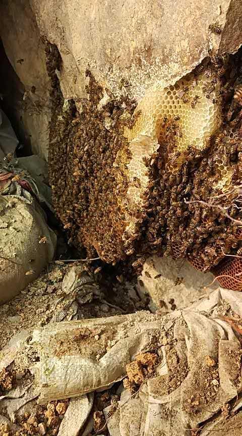 找蜜蜂窩也是技術活。學會了就不怕沒蜜吃 - 每日頭條