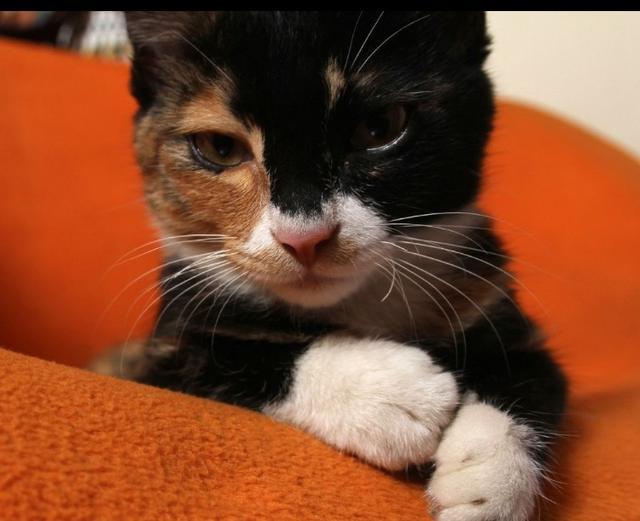 貓咪喜歡抓人、咬人是什麼原因 - 每日頭條