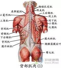 急性腰扭傷扭傷的是什麼? - 每日頭條