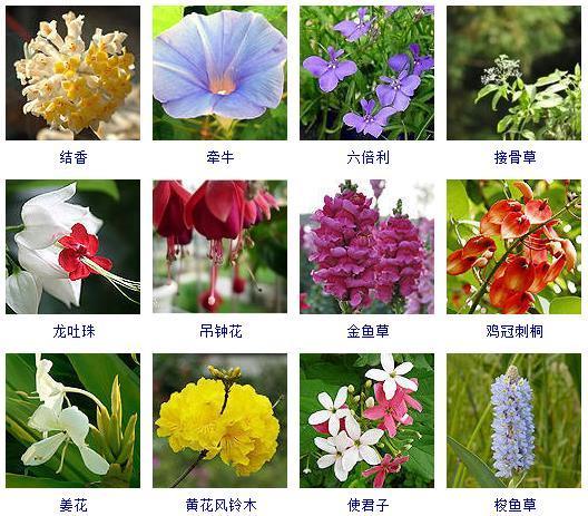 春天到底哪些花會開?有300多種!來一探究竟! - 每日頭條
