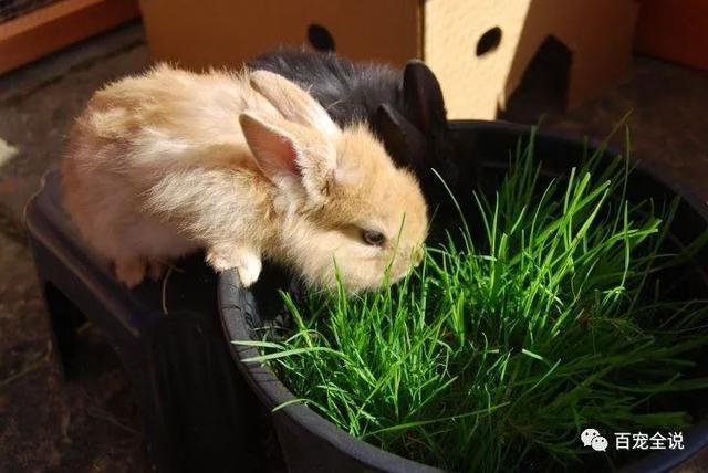 還在糾結餵兔子吃什麼草?把各種草的優缺點詳細分析給你聽 - 每日頭條