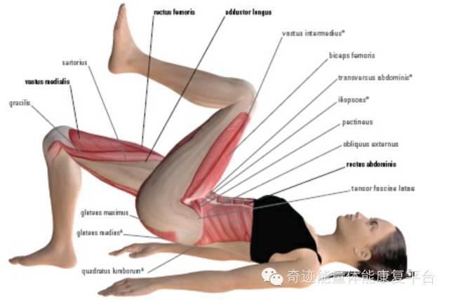 膝痛,可從髖入手 - 每日頭條