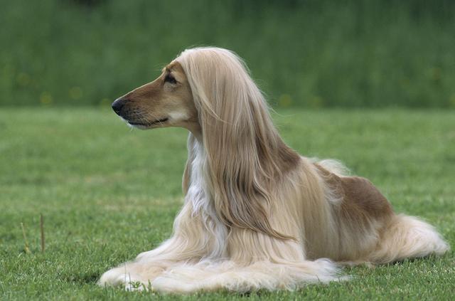 五個小妙招解決寵物皮屑問題。皮屑去無蹤。毛髮更出眾 - 每日頭條