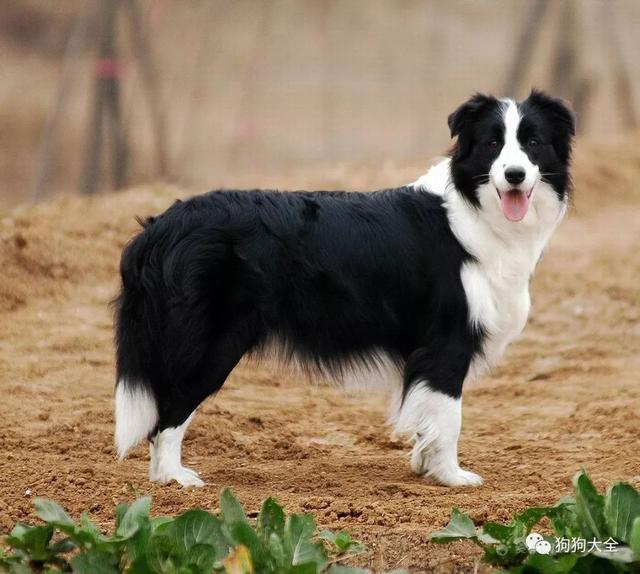 最適合女孩養的狗狗-15種。來投票看看哪種排第一?結果超乎意料 - 每日頭條
