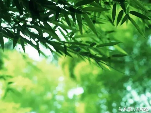 古典詩詞中竹的意象 - 每日頭條