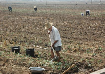 秋季到了,農民可以種植哪些農作物? - 每日頭條