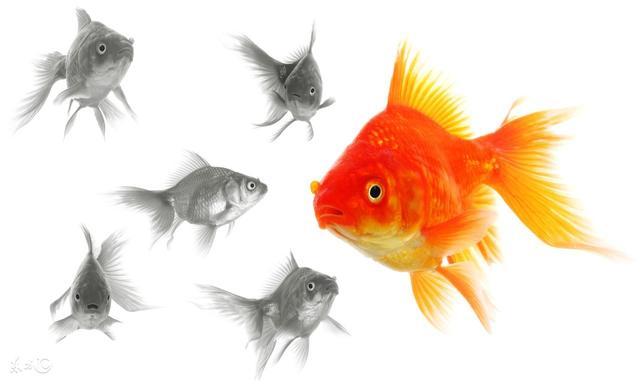 養魚養財?看看這幾種魚你養對了嗎? - 每日頭條