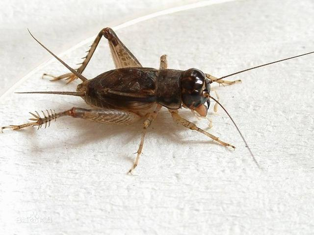 大!匯!總!家裡 小區里 常見的蟲子總結!它們你都認識嗎? - 每日頭條