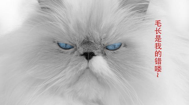 難過。我家貓咪天生淚痕嚴重!到底該怎麼辦? - 每日頭條
