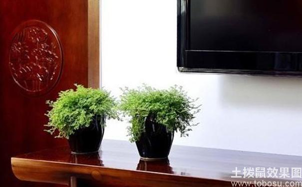 客廳植物擺放風水的原則有哪些 - 每日頭條