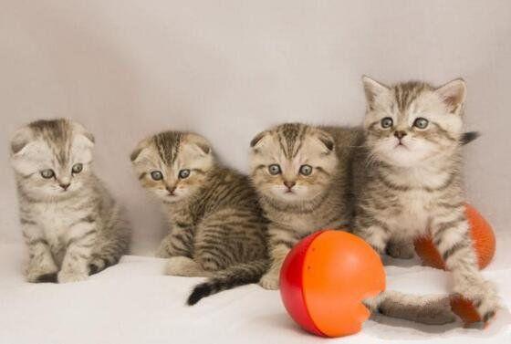 全球20大最粘人的貓咪。第八種有潔癖。最後一種最完美的伴侶 - 每日頭條